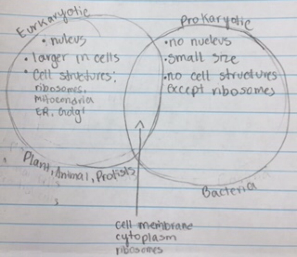 Eukaryotic cells and prokaryotic cells have many differences, but they do  have in common having a cell membrane a cytoplasm and ribosomes.